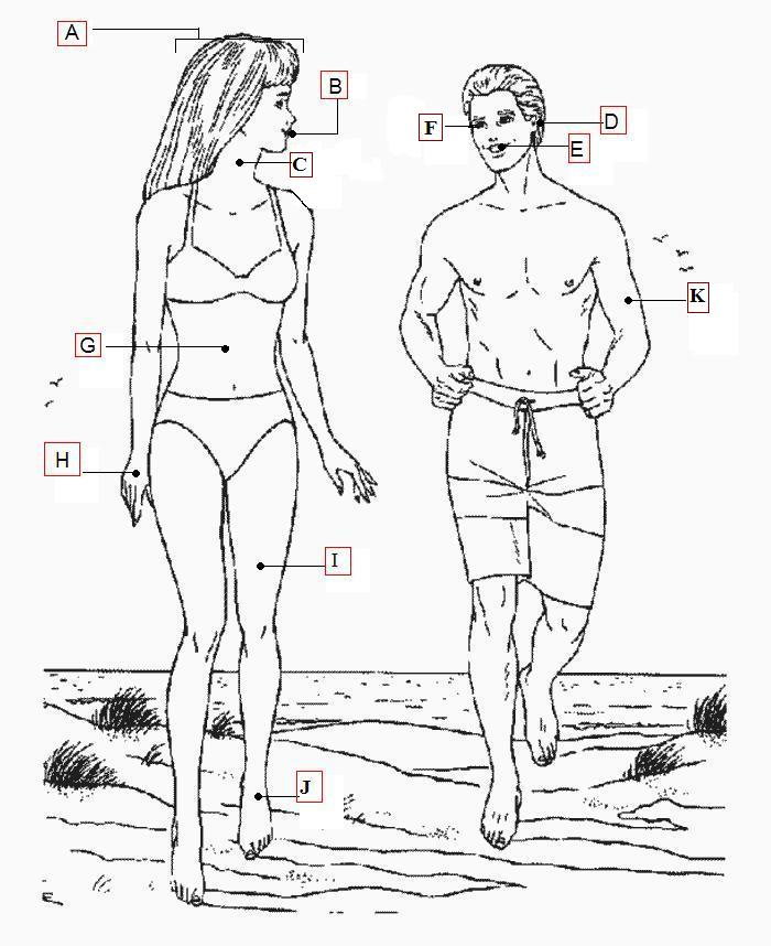 body parts in spanish diagram body parts in italian diagram body parts